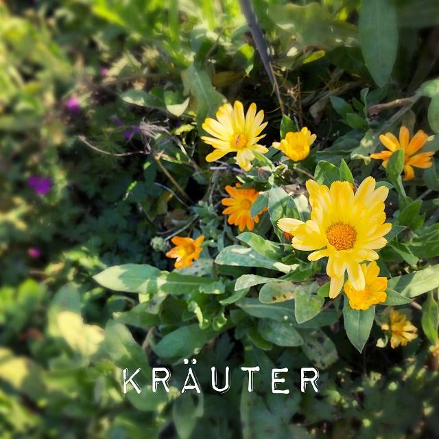 Heilkrauter im Kräuterduftgarten